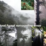 Cloud forest surronding areas